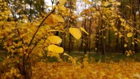 Foglie d'ingiallimento nel parco di autunno Fotografie Stock Libere da Diritti