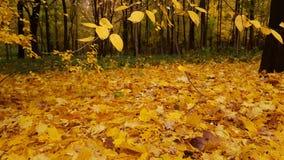 Foglie d'ingiallimento nel parco di autunno Fotografia Stock Libera da Diritti