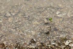 Foglie dalle conchiglie di ostrica Fotografia Stock Libera da Diritti