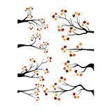 Foglie decorative di Autumn Branch Tree Silhouette With Brown Immagine Stock