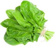 Foglie degli spinaci Fotografia Stock Libera da Diritti