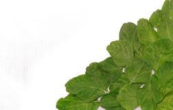 Foglie degli spinaci. Immagine Stock Libera da Diritti