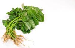 Foglie degli spinaci. Fotografie Stock