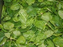 Foglie degli spinaci Immagini Stock