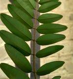 foglie dei fiori Fotografie Stock Libere da Diritti