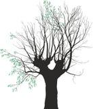 Foglie dei giovani sul vecchio albero Fotografia Stock