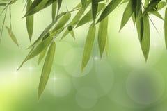 Foglie del bambù Fotografie Stock