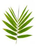 Foglie del bambù Immagini Stock