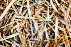 foglie del bambù sulla terra fotografia stock