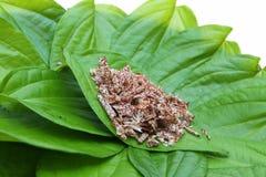 Foglie del betel e noce di betel affettata Fotografie Stock
