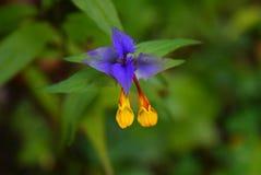 Foglie del blu con i fiori gialli immagini stock