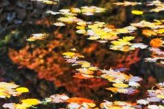 Foglie del BM Wilson Pond Water Fotografia Stock