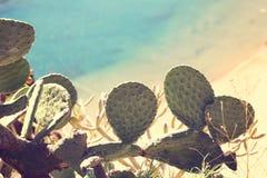 Foglie del cactus Immagini Stock Libere da Diritti