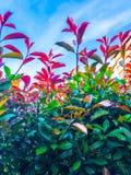 Foglie del colorfull e del cielo blu fotografia stock libera da diritti