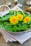 Foglie del dente di leone ed uova di quaglia per le insalate vegetariane Fuoco selettivo Immagine Stock