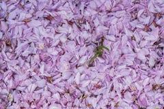Foglie del fiore Fotografia Stock