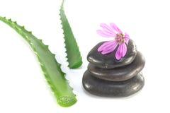 Foglie del fiore e delle pietre della strega dell'aloe Fotografia Stock