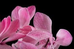 Foglie del fiore viola Fotografia Stock Libera da Diritti