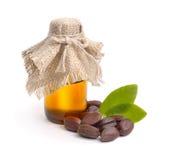 Foglie del jojoba (Simmondsia chinensis), semi con olio Fotografie Stock Libere da Diritti