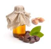 Foglie del jojoba (Simmondsia chinensis), semi con olio Fotografia Stock