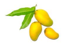 Foglie del mango e del mango per isolato Immagine Stock Libera da Diritti
