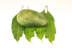 Foglie del mango isolate su fondo bianco Immagini Stock Libere da Diritti