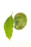 Foglie del mango isolate su fondo bianco Fotografia Stock Libera da Diritti