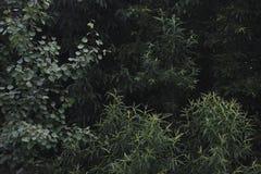 Foglie del salice Fotografia Stock Libera da Diritti