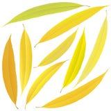 Foglie del salice di autunno Fotografie Stock Libere da Diritti