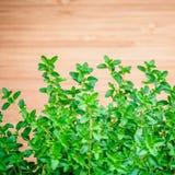 Foglie del timo del limone del primo piano dall'orto domestico Citriodo del timo Fotografia Stock