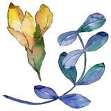 Foglie dell'acacia in uno stile dell'acquerello isolate Fotografia Stock
