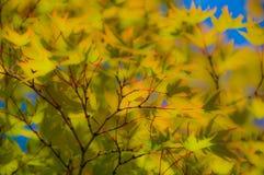 Foglie dell'albero in autunno Fotografia Stock