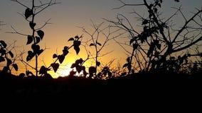 Foglie dell'albero del fondo di alba di tramonto nella parte anteriore fotografia stock libera da diritti