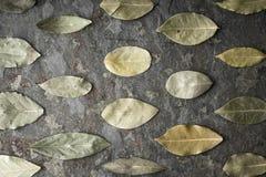 Foglie dell'albero dell'alloro sulla tavola di pietra Fotografia Stock Libera da Diritti