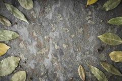 Foglie dell'albero dell'alloro sulla tavola di pietra Immagini Stock