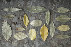 Foglie dell'albero dell'alloro sulla tavola di pietra Fotografia Stock