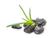 Foglie dell'aloe e pietre di zen Fotografia Stock
