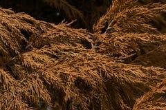 Foglie dell'arancia in foresta tropicale Fotografia Stock Libera da Diritti