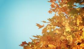 Foglie dell'arancia nel parco di autunno Immagini Stock Libere da Diritti