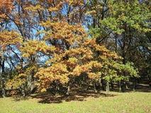 Foglie dell'autunno Immagine Stock