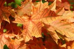 Foglie dell'autunno Fotografia Stock Libera da Diritti