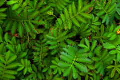 Foglie dell'erba di colore verde della carta da parati Fotografie Stock