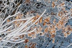 Foglie dell'estratto di inverno nella neve Fotografia Stock
