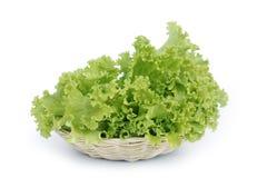 Foglie dell'insalata Immagini Stock
