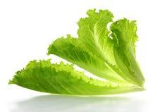 Foglie dell'insalata della lattuga Immagini Stock Libere da Diritti