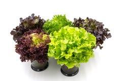 Foglie dell'insalata in vetro Fotografie Stock