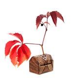 Foglie dell'uva di autunno con la bacca Immagini Stock