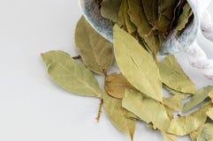 Foglie della baia sulla tabella di legno bianca Fotografia Stock