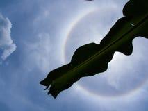 Foglie della banana davanti ad una siluetta nera dell'alone di The Sun dentro Immagini Stock