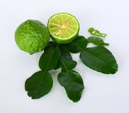 Foglie della calce del Kaffir & frutta della calce del Kaffir| Makrut di Bai & makrut di sguardo immagine stock libera da diritti
